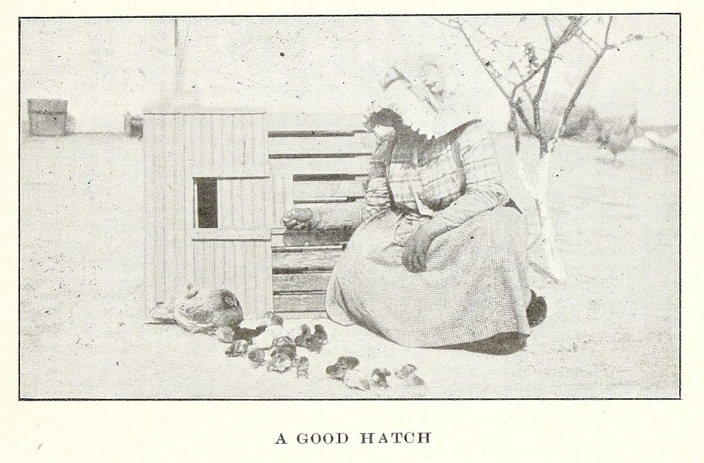 Woman with chicks and henhouse