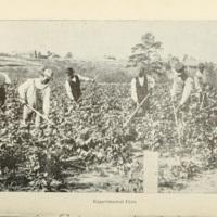 Cotton Growing on Sandy Upland Soils 4.jpg