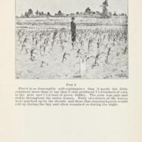 Increasing the Yield of Corn 4.jpg