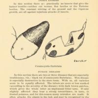 Possibilities of the Sweet Potato in Macon County, Alabama 2.jpg