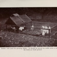 Shelter With Yard for Growing Chicks.jpg