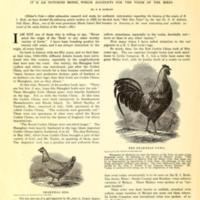 Origin of the Rhode Island Reds.jpg