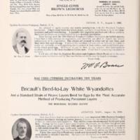 Bricaults Bred to Lay White Wyandottes.jpg