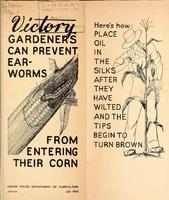 Victory Gardeners Can Prevent Ear-Worms From Entering Their Corn 1.jpg