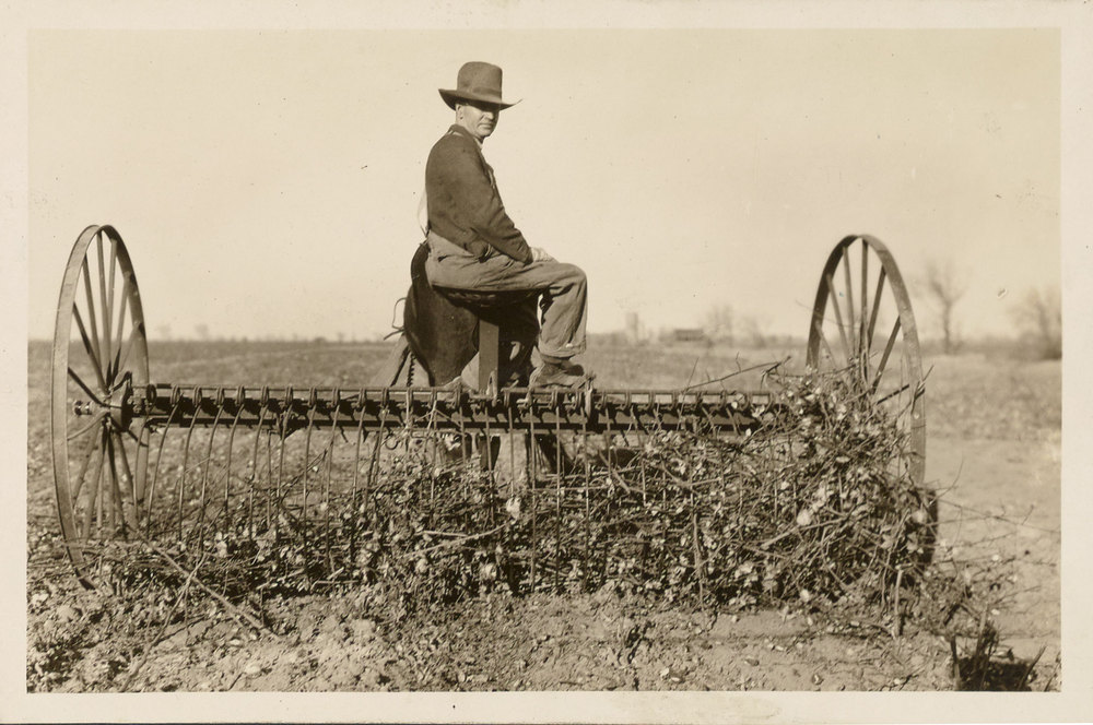 Photograph of a man cleaning a field after a pink bollworm infestation.