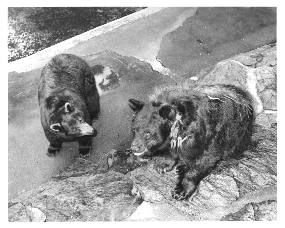 Smokey Bear And His Wife Quot Goldie Quot Who Arrived At The