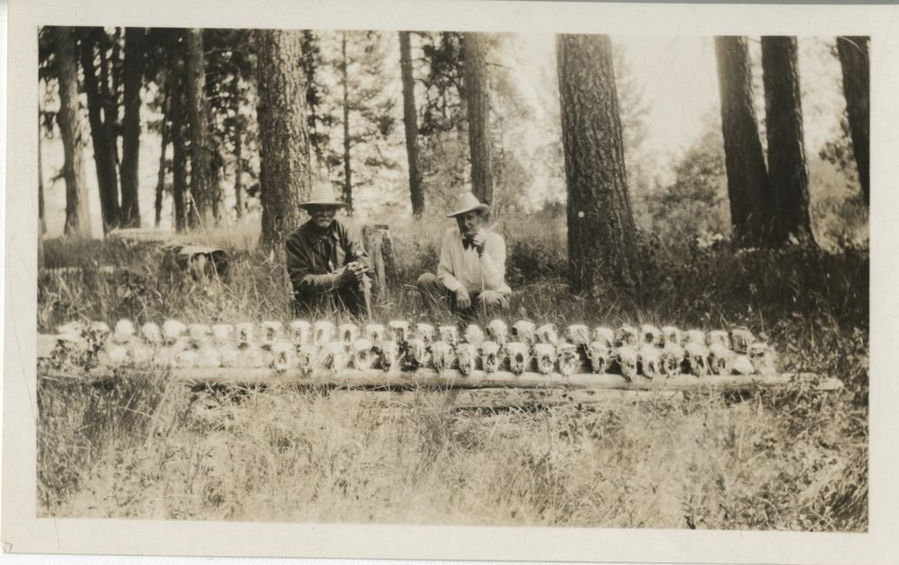 """Thumbnail for the first (or only) page of Front:  Sheep owner J.S. Kelly, Helemsville, Montana, and Dr. Wilking, Montana.  Each skull represents 13 head of sheep """"died winter of '23 and Spring '24 on """"Opsata place"""", Ovando, Montana.  700 head in all died.."""