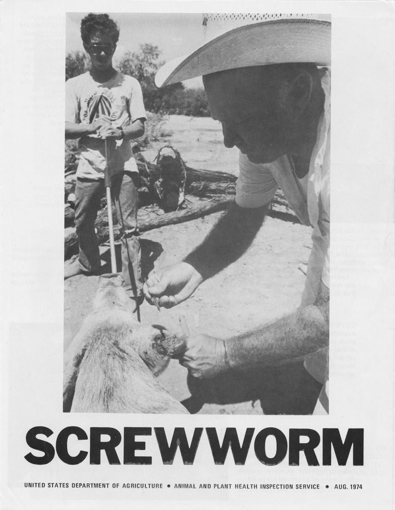 Screwworm