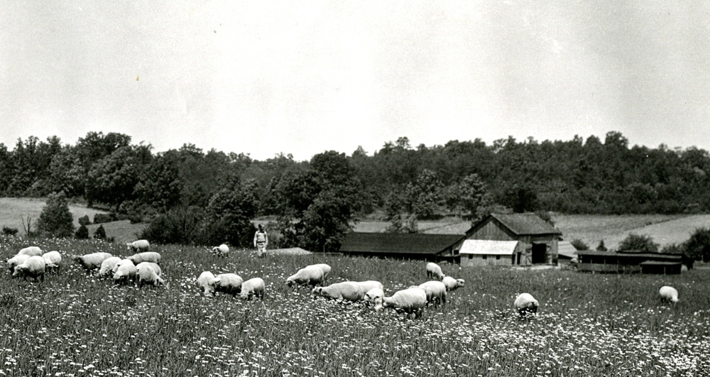 Thumbnail for the first (or only) page of U.S. Sheep Farm in Vienna, Virginia.
