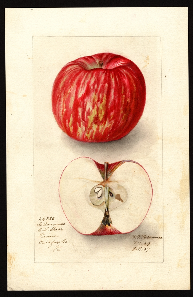 St. Lawrence Apple