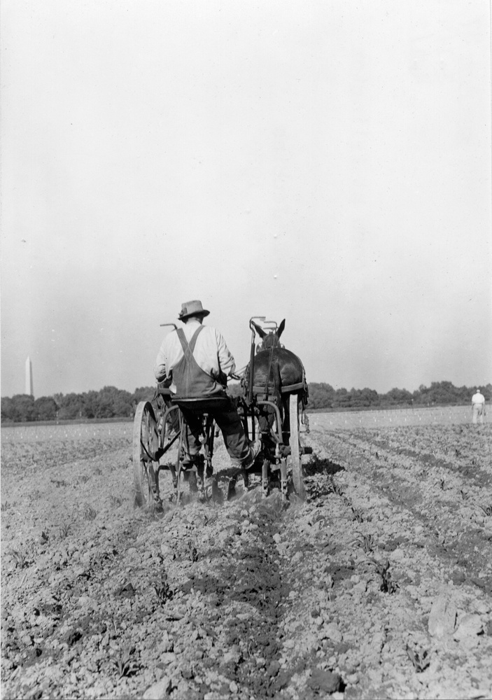 First cultivation of corn at Arlington Farm, Virginia,  Notice the Washington Monument in the background.