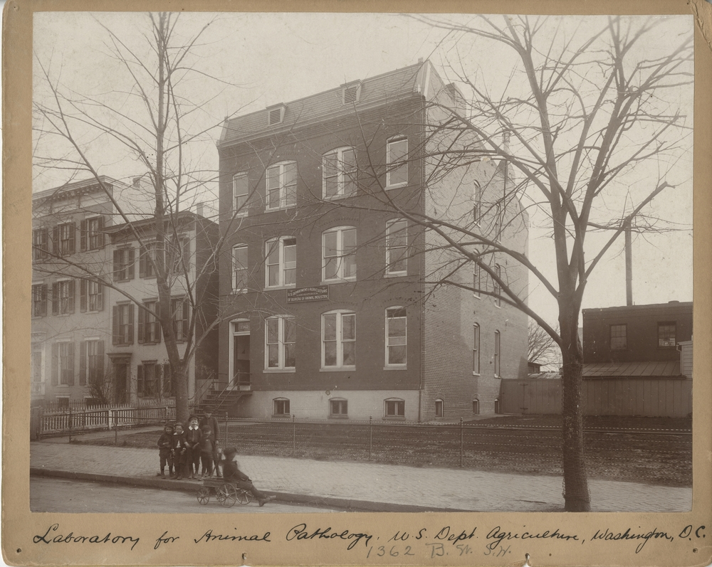 Thumbnail for the first (or only) page of This Washington, D.C. building was occupied by the 3 laboratories of the United States Department of Agriculture Bureau of Animal Industry up to 1908: First floor, Zoological Division (front) and Library (rear); Second floor, Pathological Division; Basement, Animal Room..