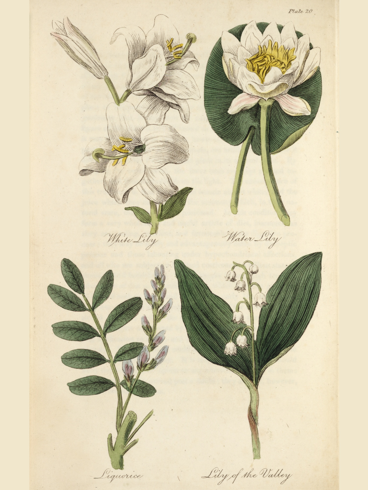 Lily Of The Valley Special Collections Exhibits