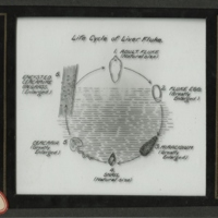 Image (illustration or photograph) for this item, linking to the individual item page.