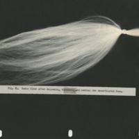Thumbnail for the first (or only) page of Manuscript: From the Culture and Processing of Ramie: The Strongest Known Best Fiber and A Very Superior Flax Substitute for A Great Many Purposes.