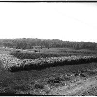 Arlington Farm