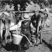 http://omeka-dev.nal.usda.gov/exhibits/files/imports/dairy/mehring.jpg