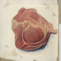 http://omeka-dev.nal.usda.gov/exhibits/speccoll/files/imports/parasitology/223-040-019-001_001.jpg