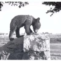 Young Smokey on rock
