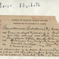 Handwriting sample: Elizabeth E. Morse
