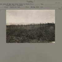 https://omeka-dev.nal.usda.gov/exhibits/speccoll/files/imports/manuscript_collections/oakville/c-65_P-23509_CoverCropBlock1and2_RyeandVetch_OEV_Oakville_CA_Spring_1918_B18.jpg