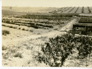 Thumbnail for the first (or only) page of Panorama of Drug Garden at Arlington.