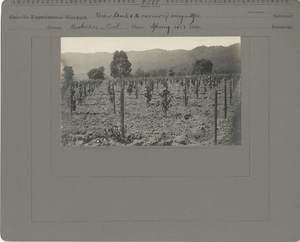 Thumbnail for the first (or only) page of Over Block 1 to corner of Vineyard.