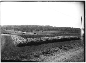 Thumbnail for the first (or only) page of Arlington Farm.