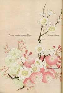 Thumbnail for the first (or only) page of The Yokohama Nursery Co., 1902, Page 34.