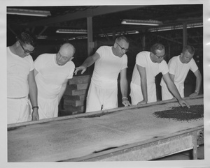 Thumbnail for the first (or only) page of Photograph of Edward F. Knipling with colleagues inspecting pupae on conveyor belt.