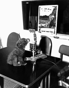 Thumbnail for the first (or only) page of Young Smokey on ABC Radio .