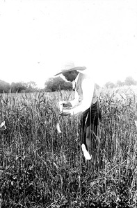 Thumbnail for the first (or only) page of Mark A. Carleton, (appointed Special Agent, 1894), crossing wheats at Garrett Park, Md., in 1894. This was before he introduced the Durum Wheats..