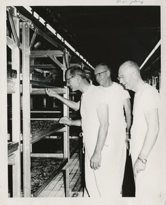 Thumbnail for the first (or only) page of Edward F. Knipling and colleagues inspecting larvae trays at Mission, Texas plant. Knipling on left..