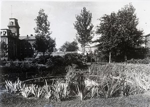 Thumbnail for the first (or only) page of Drug plant garden pool surrounded by plants. University of Nebraska, Lincoln..