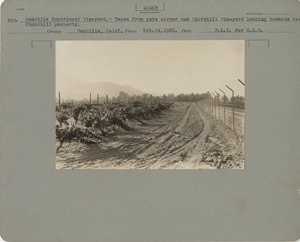 Thumbnail for the first (or only) page of Taken from gate corner and Churchill Vineyard looking towards the Churchill property.