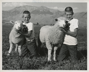 Thumbnail for the first (or only) page of Boys posing with Columbia lambs photo; Robin Roy Peterson, 9, and his brother, Rodney, 12, with two of their Columbia lambs..