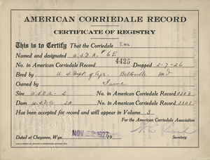 Thumbnail for the first (or only) page of Certificate of Regulation for Corriedale ewe.