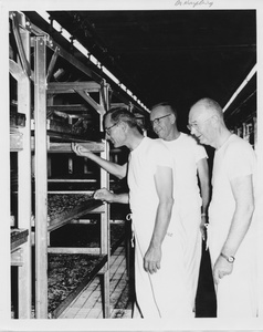 Thumbnail for the first (or only) page of Photograph of Edward F. Knipling with colleagues inspecting larvae trays.