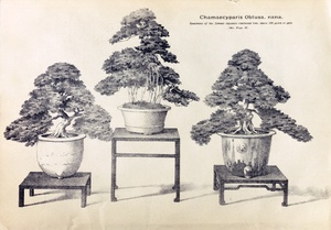 Thumbnail for the first (or only) page of The Yokohama Nursery Co., 1898, Page 57.