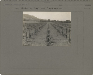 Thumbnail for the first (or only) page of Oakville Experimental Vineyard.
