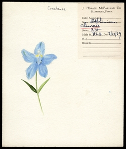 Thumbnail for the first (or only) page of <em>Delphinium</em> (Chinese Larkspur).