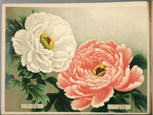 Thumbnail for the first (or only) page of Paeonia Moutan, a Collection of 50 Choice Varieties, Page 2.