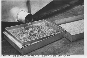 "Thumbnail for the first (or only) page of Photograph ""Larvae Discharge Hopper on Separator Conveyor."