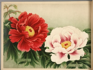 Thumbnail for the first (or only) page of Paeonia Moutan, a Collection of 50 Choice Varieties, Page 14.