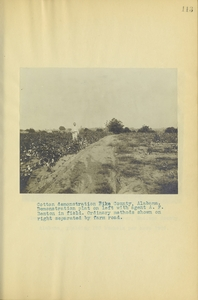 Thumbnail for the first (or only) page of Cotton demonstration, Alabama.
