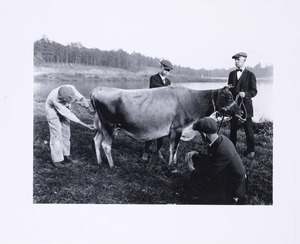 Thumbnail for the first (or only) page of Dairy judging practice (1920)..