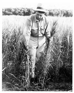 Thumbnail for the first (or only) page of Glenn Smith, first durum breeder.