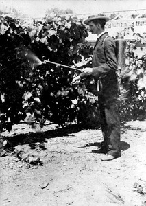 Thumbnail for the first (or only) page of The first trial of the first All-American knapsack sprayer; Mr. Galloway operating it in the vineyard back of the Department in 1891. See Journal Mycol. V. VII, 1894, p 39..
