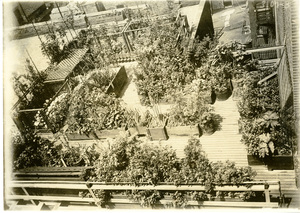 Thumbnail for the first (or only) page of Birdseye view of medicinal plant garden. Philadelphia College of Pharmacy.