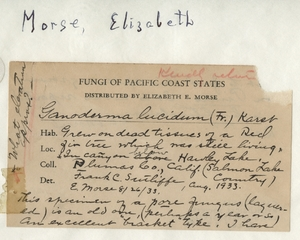 Thumbnail for the first (or only) page of Handwriting sample: Elizabeth E. Morse.